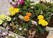 肥料・防虫剤・防草剤・園芸用薬品